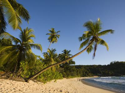 Seychelles, Mahe Island, Anse Takamaka Beach, Palm