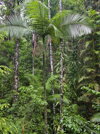 Queensland,, the Beautiful and Very Diverse Daintree Rainforest, North Queensland, Australia