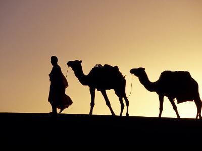 Berber Tribesman Leads His Two Camels Along the Top of Sand Dune in the Erg Chegaga, in the Sahara