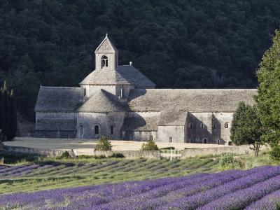 Abbey De Senanque and Lavender Fields, Near Gordes, Vaucluse, Provence, France, Europe