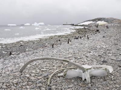 Gentoo Penguins and Whale Bones, Cuverville Island, Antarctic Peninsula