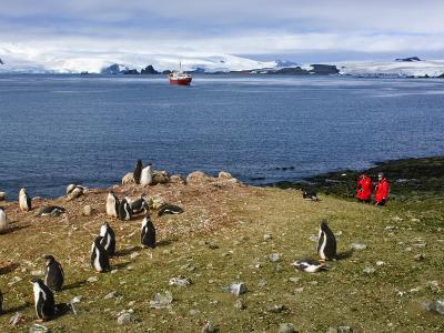 Exploring Gentoo Penguin Colony, Aitcho Islands, Antarctica, Polar Regions
