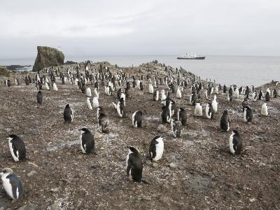 Chinstrap Penguins, Hannah Point, Livingstone Island, South Shetland Islands, Polar Regions