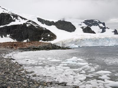 Cuverville Island, Antarctic Peninsula, Antarctica, Polar Regions
