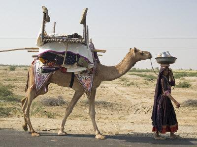 Nomadic Rabhari Tribeswoman Walking in the Kachchh Desert, Lakhdar District, Gujarat