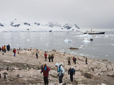 Tourists and Gentoo Penguins, Neko Harbour, Antarctic Peninsula, Antarctica, Polar Regions