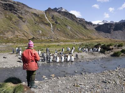 King Penguins, Moltke Harbour, Royal Bay, South Georgia, South Atlantic
