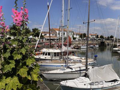 Hollyhocks on the Quayside, Ars-En-Re, Ile De Re, Charente Maritime, France, Europe