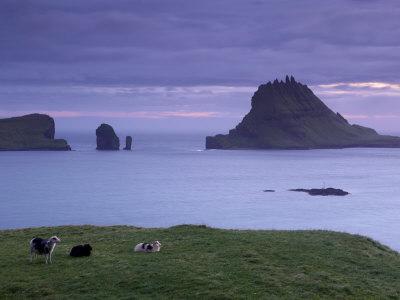 Tindholmur Island Rising to 262 M, and Drangarnir Natural Arch at Sunset, with Sheep, from Vagar