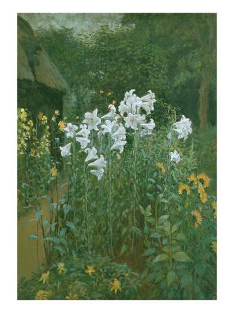 Madonna Lilies in a Garden