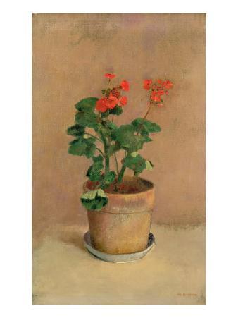 Geraniums in a Pot, c.1905