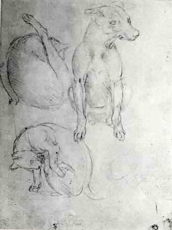 Study of a Dog and a Cat, c.1480
