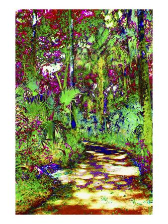Secret Trail Through Cypress Forest
