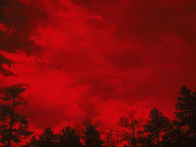 Tree Silhouettes Against a Red Sky