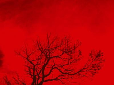Tree Silhouette Against a Red Sky