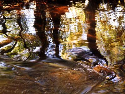 Trees Reflected in Oak Creek, Sedona, Arizona, USA