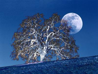 Oak Tree and Moonrise