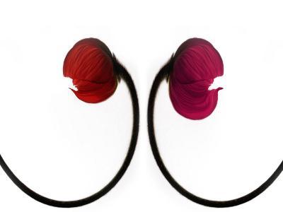 Two Poppies, Digital Art
