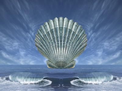 Shell Floating Above Ocean Tide with Blue Sky