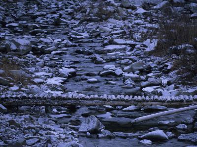Footbridge Crosses a Stream Near the Bob Marshall Wilderness Area