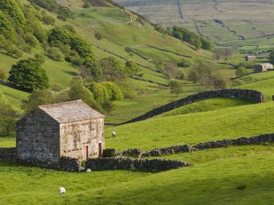 Typical Stone Barns Near Keld in Swaledale, Yorkshire Dales National Park, Yorkshire, England