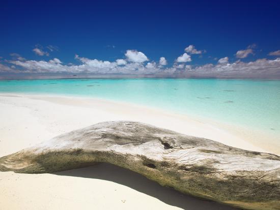 Driftwood On The Beach Maldives Indian Ocean