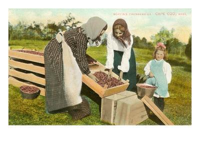 Cranberry Pickers, Cape Cod, Mass.