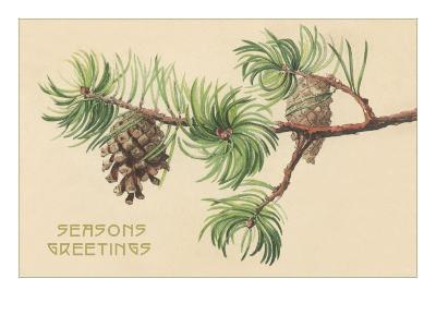Pine Cones and Boughs