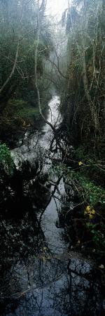 Stream Passing Through a Forest, Oscar Scherer State Park, Osprey, Sarasota County, Florida, USA
