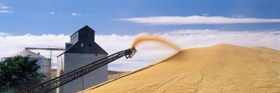 Grain Being Poured from Spout on a Combine, Whitman County, Washington State, USA