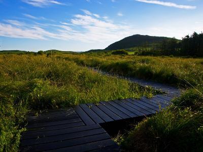 Preserved Bog Walkways, Fenor, Copper Coast, County Waterford, Ireland