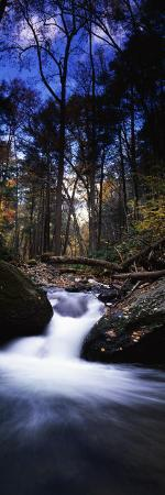 River Flowing Through a Forest, Delaware Water Gap National Recreation Area, New Jersey, USA
