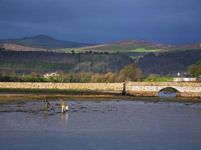 Anglers Collecting Bait, the Mudflats at Barnawee, County Waterford, Ireland