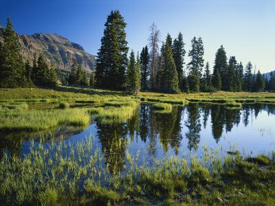 Trees and Grass Reflecting in Pond, High Uintas Wilderness, Wasatch National Forest, Utah, USA