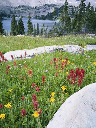 Boulders Amid Wildflowers, Ryder Lake, High Uintas Wilderness, Wasatch National Forest, Utah, USA
