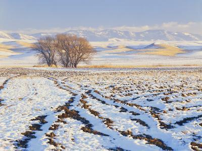 Plowed Field and Willows in Winter, Bear River Range, Cache Valley, Great Basin, Utah, USA