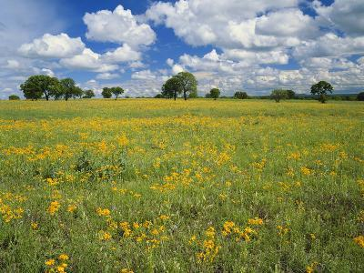 Field of Flowers and Trees with Cloudy Sky, Texas Hill Country, Texas, USA