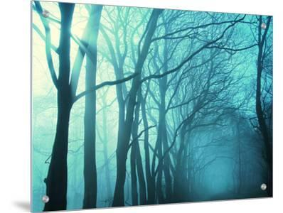 Atmospheric Image of Trees in Mist