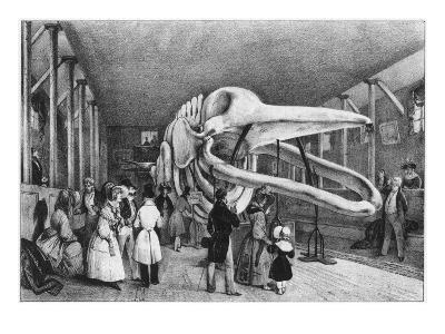 A Whale Skeleton on Display in Paris