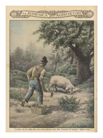 An Italian Farmer and His Truffle-Hunting Pig