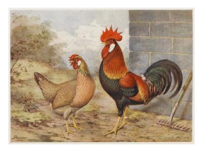 Brown Leghorn Cock and Hen