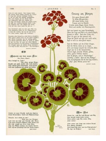 Design of Geraniums (Pelargoniums)