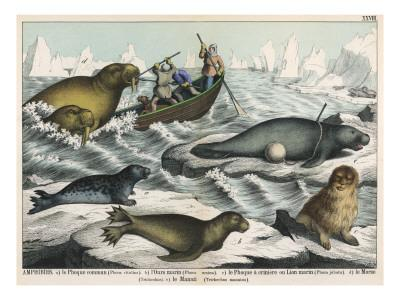 Five Types of Sea Creature: Harbour Seal, Fur Seal, Sea Lion, Walrus, and Sea Cow