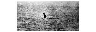 Photo of the Loch Ness Monster?