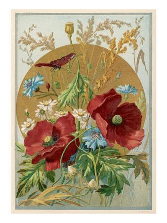Wild Flowers: Poppies, Daisies and Cornflowers