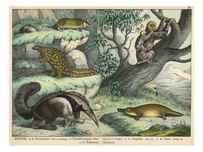 Various Quadrupeds: Giant Anteater, Brown Platypus, Pangolin, Armadillo, and Three-Toed Sloth