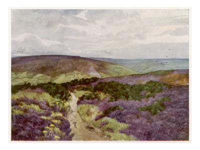 Yorkshire : a Hilltop Track Through the Heather on Sleights Moor