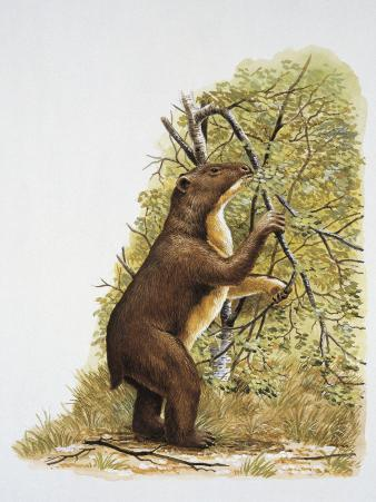 Side Profile of a Bear Eating Leaves
