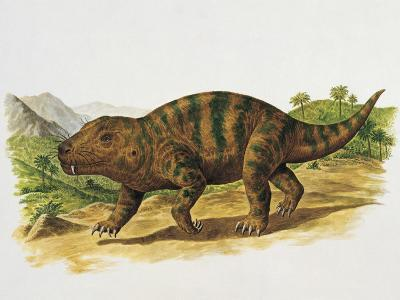 Cynognathus in the Forest