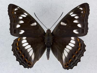 Close-Up of a Butterfly